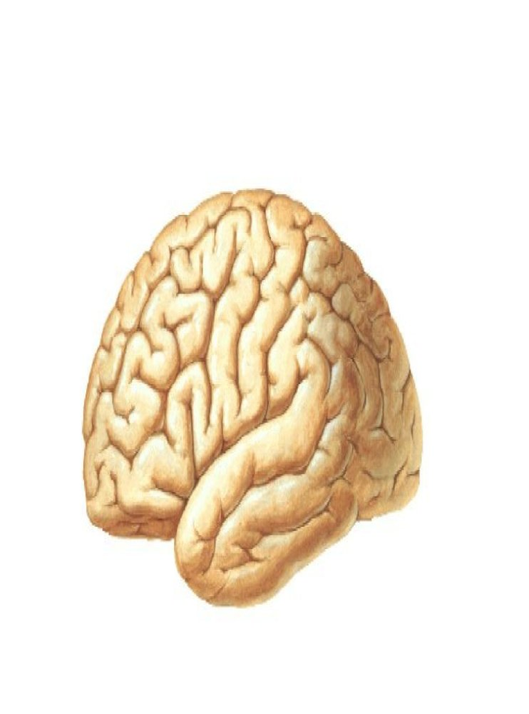 Parts Of Brain Ppt Lectures Anatomy Parts Of Filum Terminale Dura Mater Cauda Equina Coccygeal Ligament Pdf Document Жағы іі бел омыртқадан төмен қарай ат құйрықтанып (conus medullaris) , негізгі жіпшесі (filum terminale) іі құйымшақ омыртқасына дейін жетеді де. documents mx